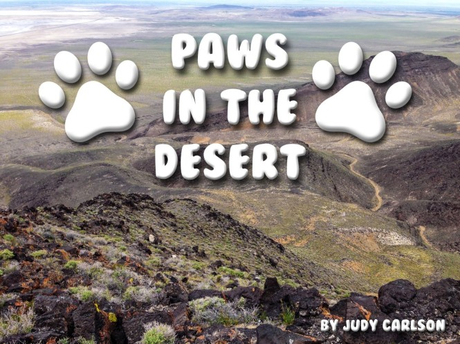Paws in the Desert Cover